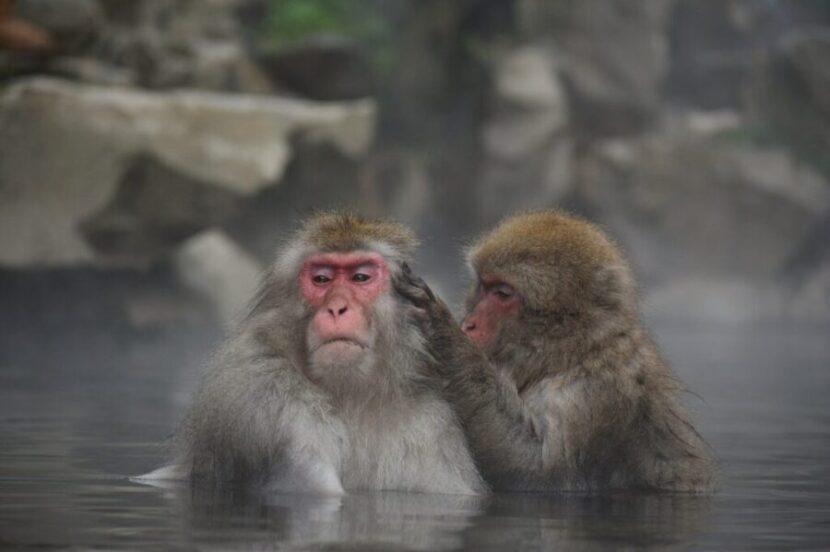 温泉に浸かっている猿